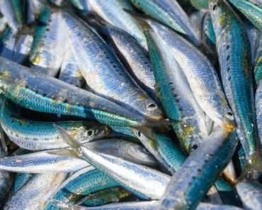 A bumper sardine run 2020 leaves some unanswered but relevant questions about our annual sardine migration and who gets to harvest and who are in lockdown
