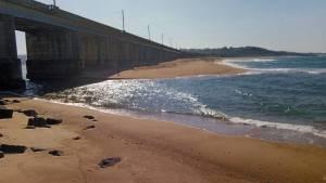 Sardines in the Shorebreak Sardine Run 2020