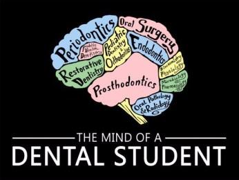dental-student-brain-dentistry