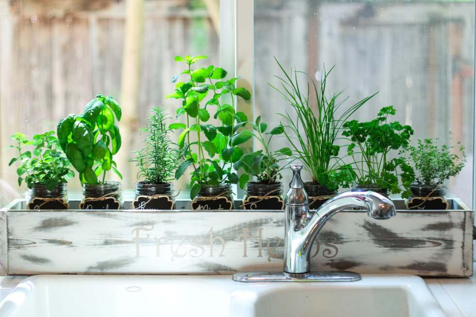 indoor mason jar herb garden in cedar planter box