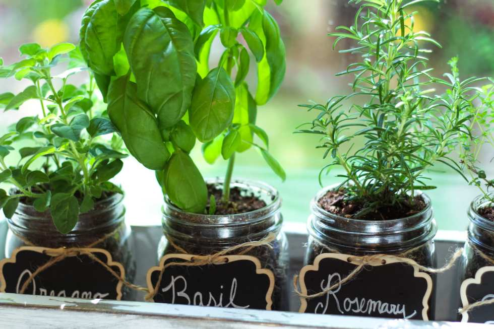 indoor mason jar herb garden in cedar planter box