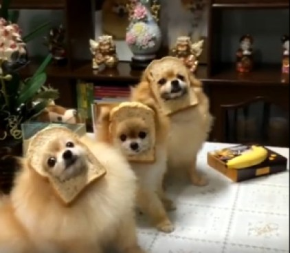 Poms with Bread