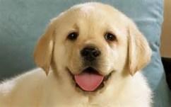 smilingdog4