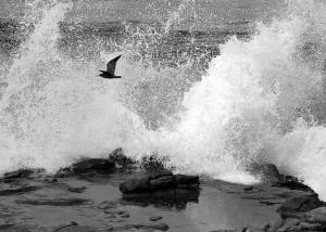 seagul flying through big wave 3