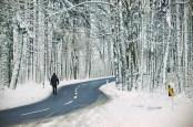winter01colorMORE-WHITE-WEB
