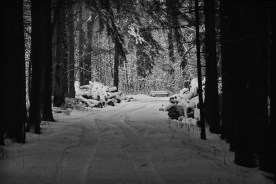 winter05bwhiteWEB