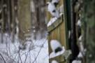 winter06colorWEB