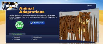 Animal Adaptations StudyJams