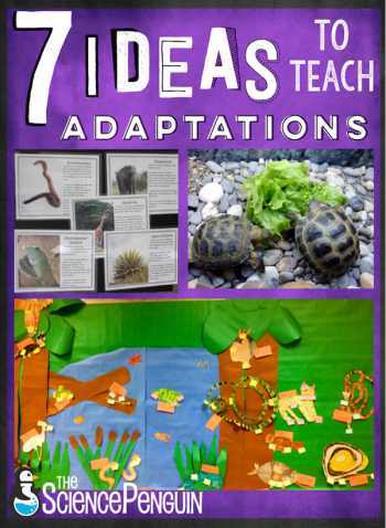 7 ideas to teach your students about adaptations-- projects, free cards, resources, and ideas