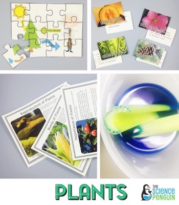 Plants Science Stations Unit
