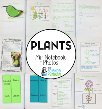 Interactive Science Notebook pics for plants and photosynthesis