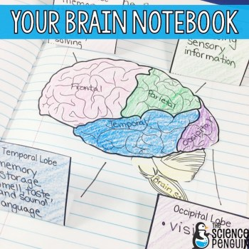 Your Brain Notebook for Back to School