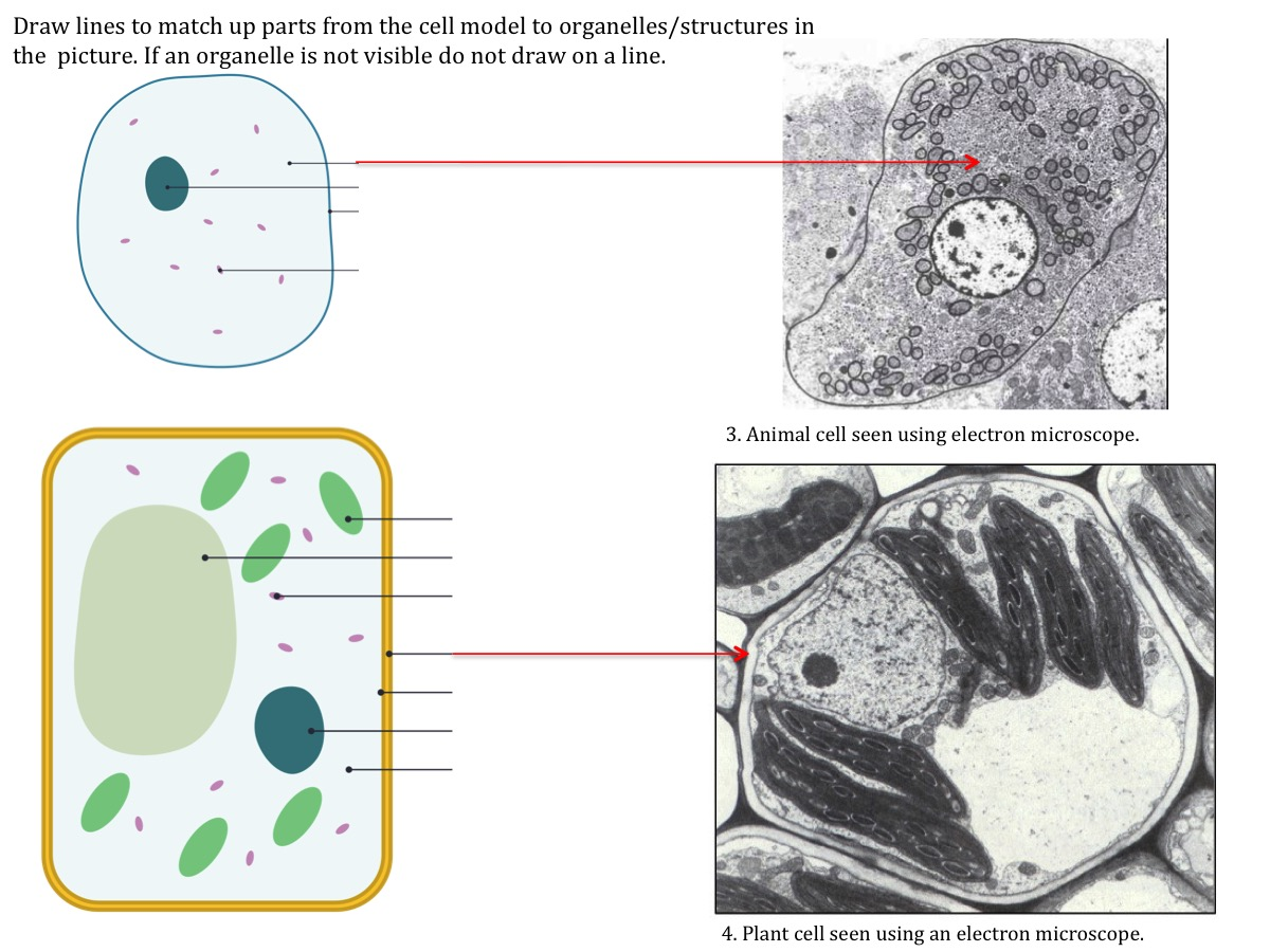 Cell Structure Teaching Resources The Science Teacher