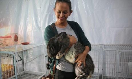 A visitor holding onto a Flemish Giant rabbit. Photo: Rafidah Hamit/The Scoop