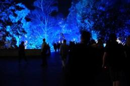 enlighten-blue