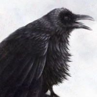ravenCrop