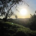 Ridgeline Trail: A Great Walk Right in Our Own Backyard