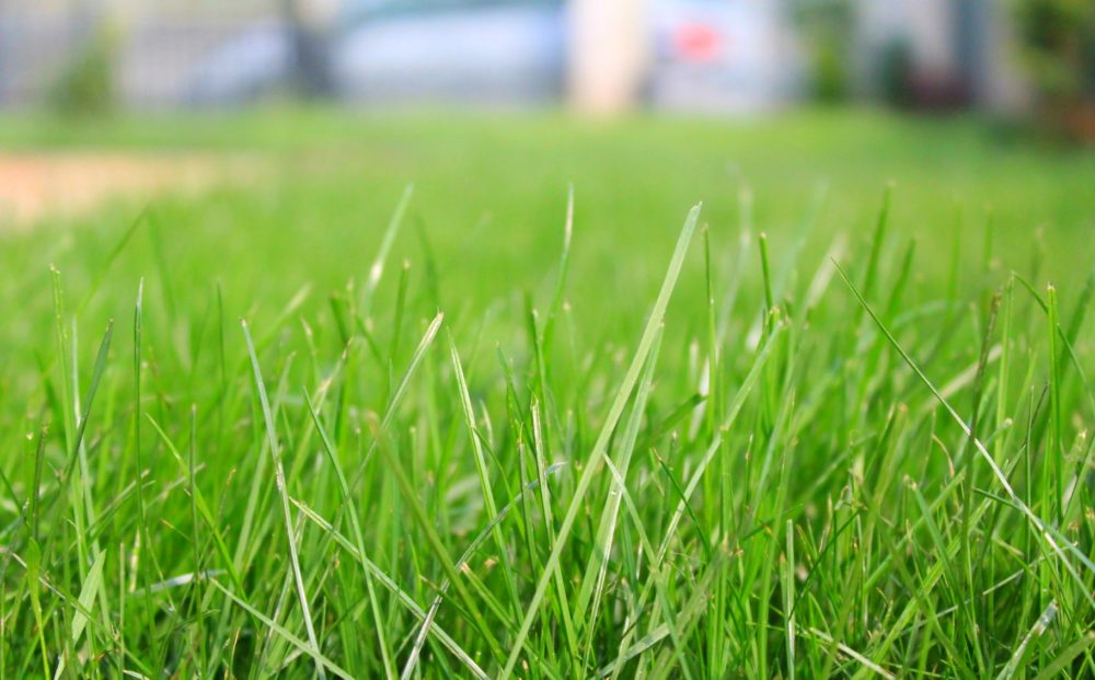 preparing soil for grass seed