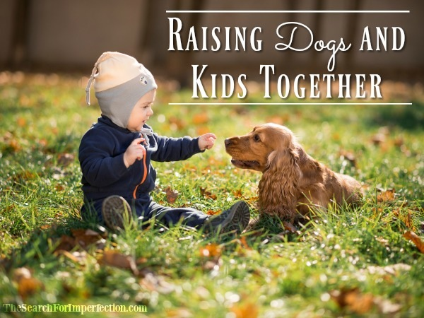 Dogs and Kids – 11 Things to Consider When Raising them Together
