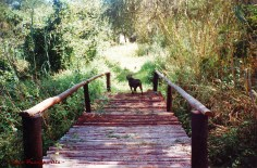 A pedestrian bridge constructed of treated gum poles which I built and dedicated to my recently-deceased mother around 2002.