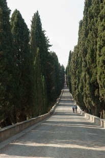 The cypress tree viale leading from the villa to the road.