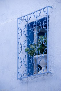 Simple and lovely - a plant in a white pot, framed by blue.