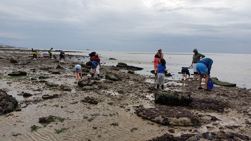 children and adults searching for fossils on the beach at low tide