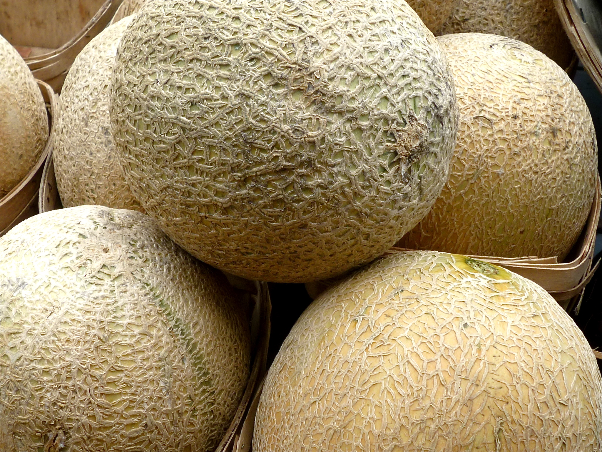 Muskmelons (also commonly called cantaloupe)