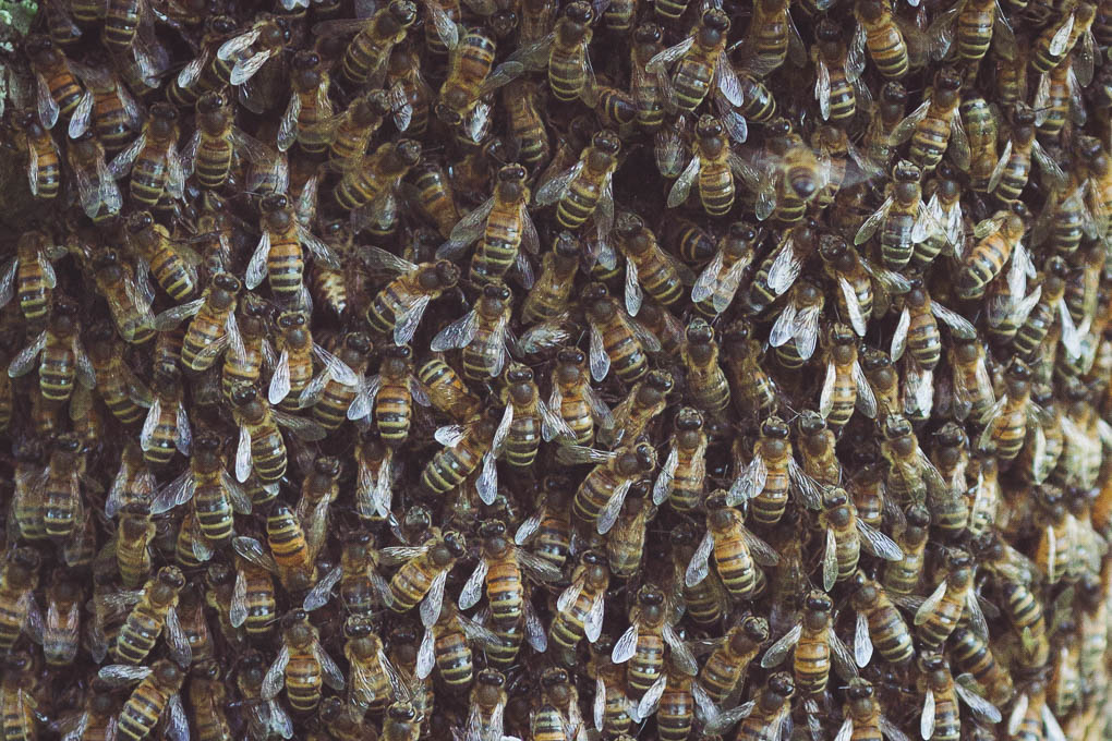 Rainy Days and Lost Swarms -- Honeybees | https://theseasonaltable.co.uk/smallholding/rainy-days-lost-swarms/
