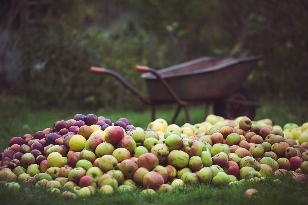 Apple Pressing Weekend 3 The Seasonal Table