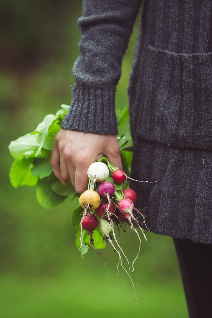 Planning the Vegetable Garden -- Radishes -- Seasonal Food UK | https://theseasonaltable.co.uk/smallholding/planning-vegetable-garden/