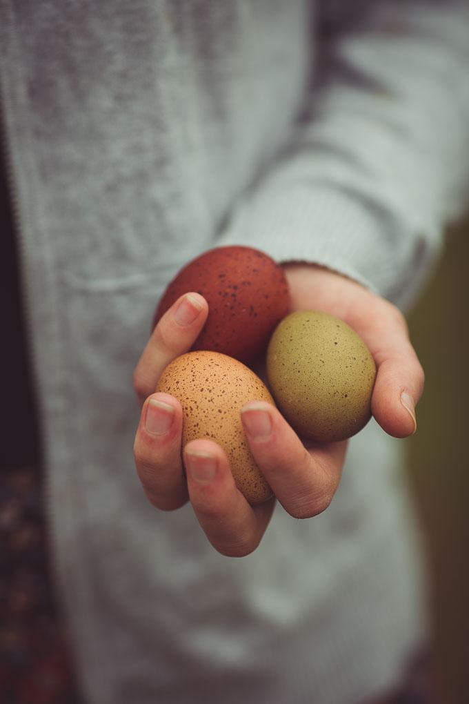 Chickens - Creating a Dual Purpose UK Easter Egger Flock – Part 1 -- Speckled olive egg and Marans egg | https://theseasonaltable.co.uk/smallholding/chickens-creating-a-dual-purpose-uk-easter-egger-flock-part-1