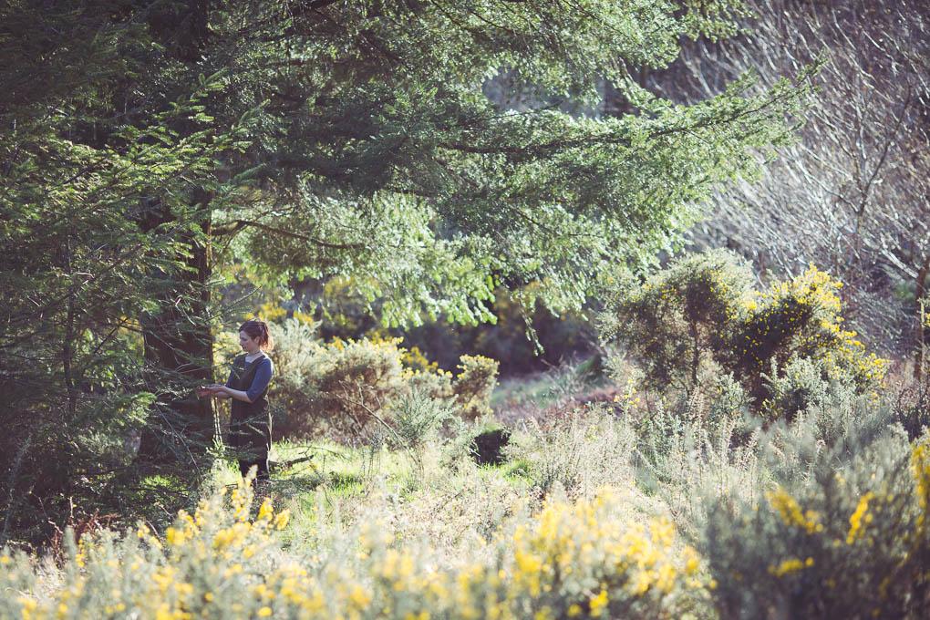 Pine Needle Vinegar -- Spring foraging UK | https://theseasonaltable.co.uk/savoury/pine-needle-vinegar/