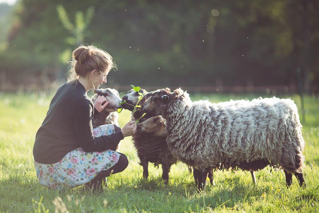 Shetland Sheep -- Breed Characteristics | https://theseasonaltable.co.uk/smallholding/shetland-sheep/