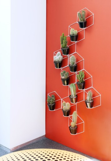 Living art with Cacti