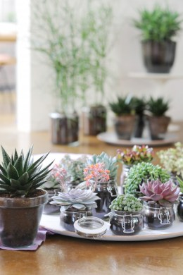 A group of succulents together can make a big impact