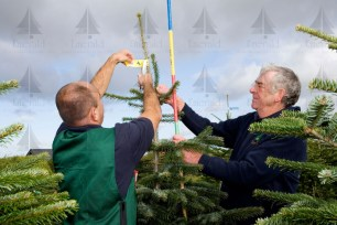 Sizing and shaping of Christmas trees