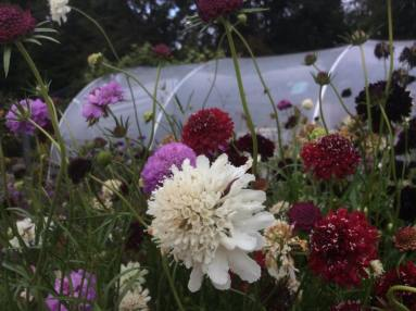 flowers-at-the-secret-garden