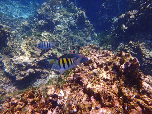 Snorkeling in Rosario islands, Cartagena, Colombia