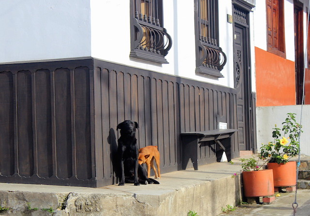 Dogs in Salento, Colombia