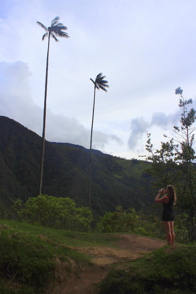 Wax palm trees in Cocora Valley, Salento, Colombia