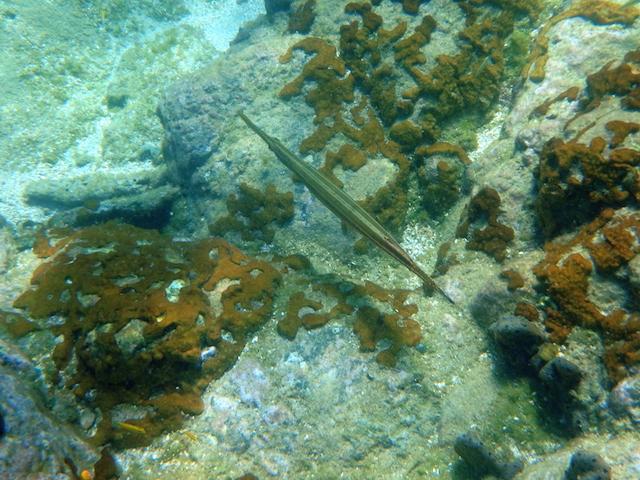 Snorkeling in Bequia, Grenadine islands