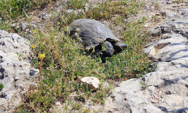 Turtle in the Acropolis