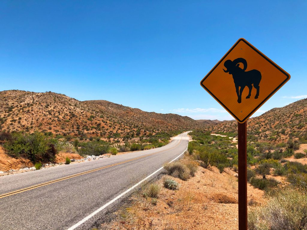 joshua-tree-national-park-adventure-tour-hiking-climbing-camping-bighorn-sheep-sign