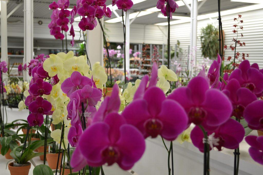 gubler-orchids-nursery-joshua-tree-national-park-climbing-hiking-camping-adventure-tour