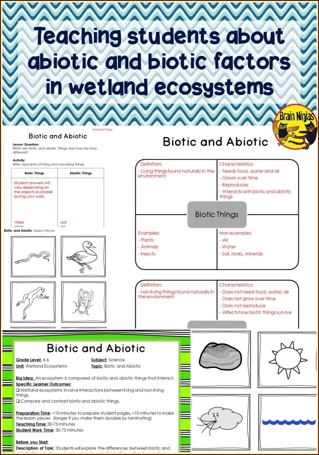 Biology Science Skills Worksheet Answer Key Worksheet
