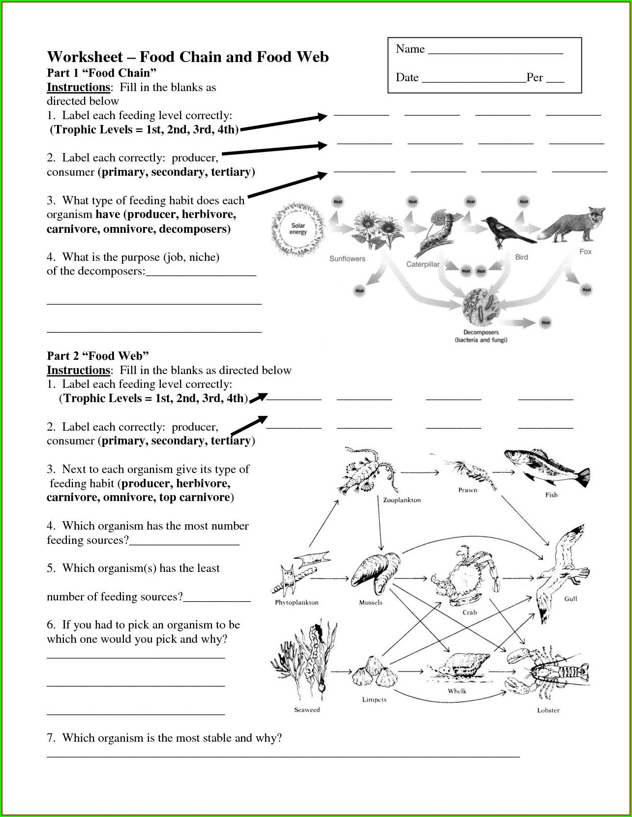 Answer Worksheet Food Chain Quiz Worksheet Resume Examples