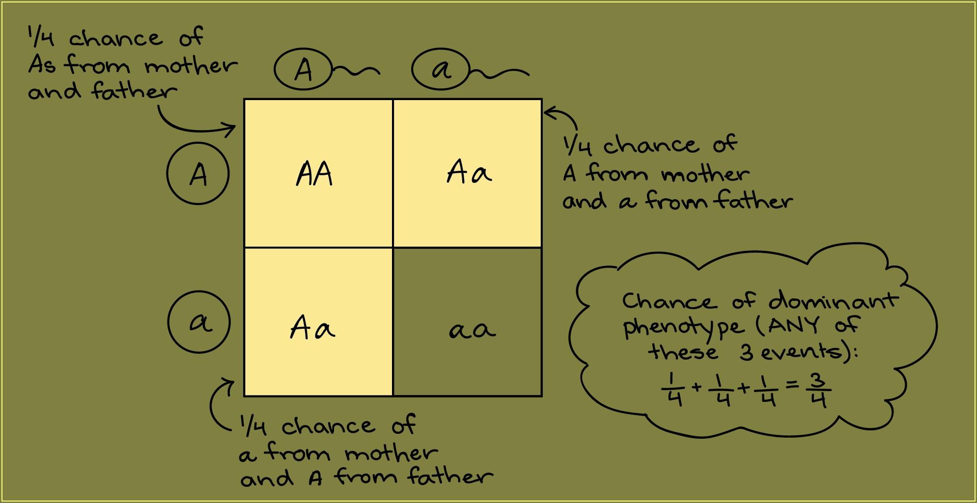 Scientific Method Review Worksheet Middle School Worksheet
