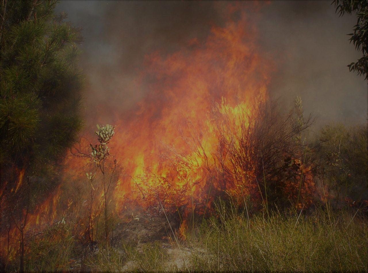 Covid-19 can't stop Bushfires