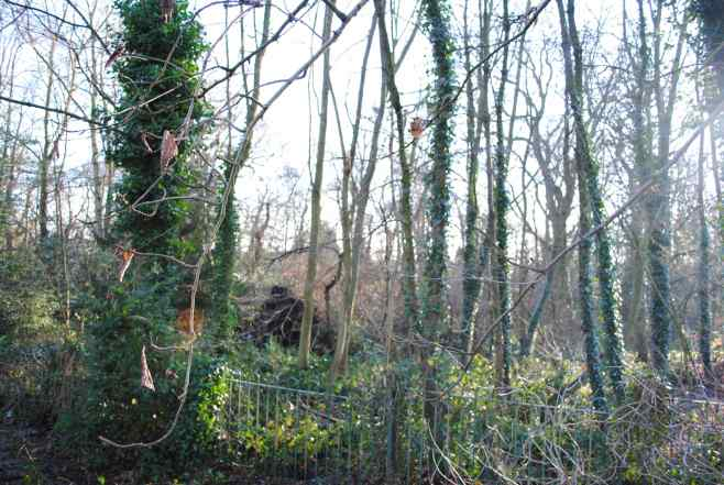 Stock's Wood Bournville